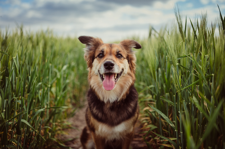 The Pet Trust: Putting Your Best Friend In Your Estate Plan